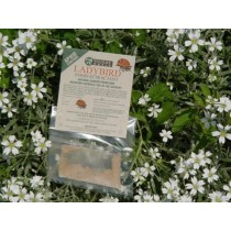 Wildlife World Ladybird Food Attractant LFA