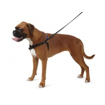 Ancol, Stop Pulling Dog Training Harness & Lead - X-Large W/Dvd